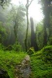 Selva de Nepal Foto de archivo