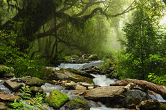 Selva de Nepal Fotografia de Stock Royalty Free