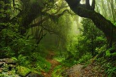 Selva de Nepal imagenes de archivo