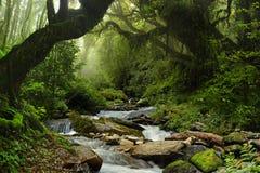 Selva de Nepal Fotografía de archivo