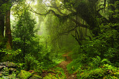 Selva de Nepal Fotos de Stock
