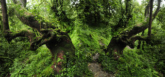 Selva de Nepal Fotos de archivo libres de regalías