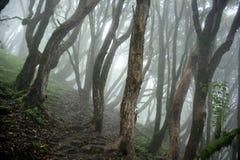 Selva de Nepal Foto de archivo libre de regalías