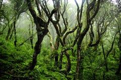 Selva de Nepal Imagen de archivo libre de regalías