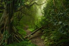Selva de Nepal Imagen de archivo