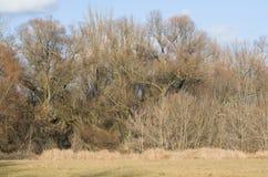Selva de ramas Foto de archivo libre de regalías
