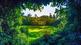Selva de Taman Negara, Malásia Imagem de Stock Royalty Free