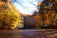 Selva de Yedigöller Bolu Turquia Imagem de Stock