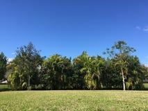 Selva del patio trasero Imágenes de archivo libres de regalías