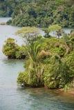 Selva densa por el lago Fotos de archivo libres de regalías