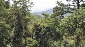 Selva do jardim botânico imagens de stock