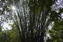 Selva dos bambus e luz do sol fotos de stock