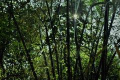 Selva dos bambus e luz do sol imagens de stock royalty free