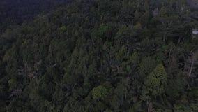 Selva e floresta aéreas vídeos de arquivo