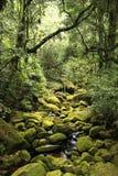 Selva em Brasil fotografia de stock