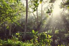 Selva em Costa Rica Fotos de Stock