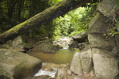Selva em Tailândia Imagem de Stock Royalty Free