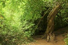Selva em Tailândia do norte Fotos de Stock Royalty Free
