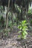 Selva em Zanzibar Foto de Stock