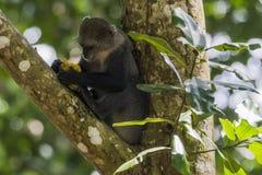 Selva em Zanzibar fotografia de stock
