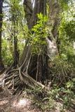 Selva em Zanzibar foto de stock royalty free