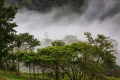 Selva en Costa Rica imagen de archivo libre de regalías
