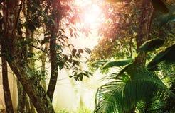 Selva en Costa Rica fotografía de archivo libre de regalías