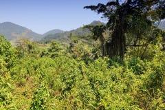 Selva en el Brasil Fotos de archivo libres de regalías