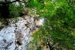 Selva en la cueva de Phraya Nakhon Foto de archivo libre de regalías