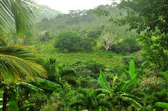 Selva en la República Dominicana fotografía de archivo