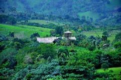 Selva en la República Dominicana Foto de archivo