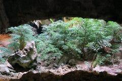 Selva en una cueva en el parque nacional de Khao Sam Roi Yot Imagen de archivo libre de regalías