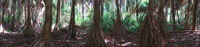 Selva en Zanzíbar imagen de archivo