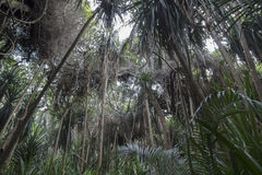 Selva en Zanzíbar fotografía de archivo libre de regalías