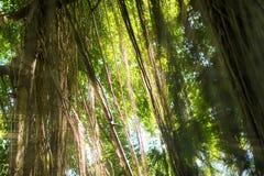 Selva exótica tropical de la selva tropical con el sol Imágenes de archivo libres de regalías