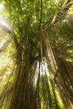 Selva exótica tropical de la selva tropical con el sol Imagen de archivo libre de regalías