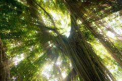 Selva exótica tropical de la selva tropical con el sol Foto de archivo