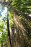 Selva exótica tropical de la selva tropical en la isla de Bali del asiático con el sol Imagen de archivo libre de regalías