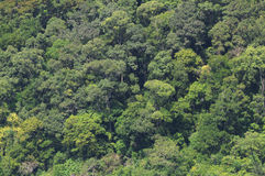 Selva, floresta húmida Foto de Stock