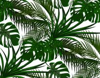 selva Folhas do verde de palmeiras tropicais Monstro, agave seamless Isolado no fundo branco Ilustração ilustração do vetor
