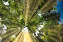 A selva fotografou a partir de baixo - a cachoeira Hua Hin Thailand de Pala U imagem de stock