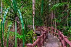 Selva grossa tailandesa e uma caminhada bonita Fotos de Stock
