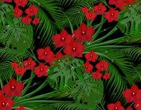 selva Hojas del verde de las palmeras tropicales, monstera, agavos Orquídeas rojas de Borgoña Descensos del rocío, lluvia inconsú Fotografía de archivo