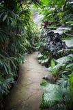 Selva indonesia Fotos de archivo libres de regalías