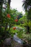 Selva indonesia Imagen de archivo