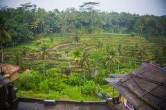 Selva indonesia Fotografía de archivo libre de regalías