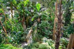Selva interior fotografía de archivo