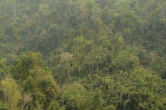 Selva, Lao, Ásia Foto de Stock