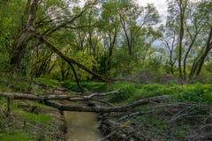 Selva lituana Imagen de archivo libre de regalías