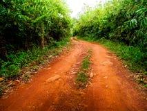 Selva a lo largo del camino de un camino de tierra fotos de archivo libres de regalías